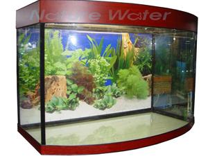 Аквариум более 200 литров для содержания цихлазомы сальвини