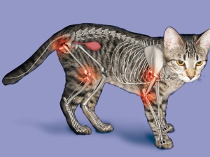 Проблема артрита у кошек