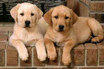 Добрые собачьи породы