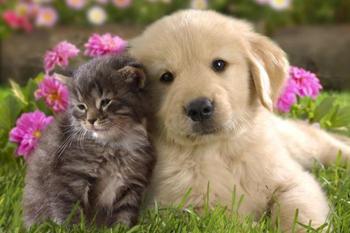 Дружба кошки с собакой