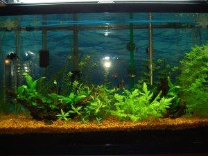 Очистка воды в аквариуме фильтром