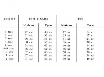 Характеристики ротвейлера