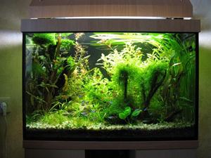 Круглосуточная подсветка аквариума