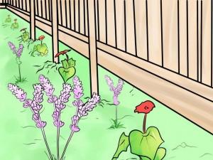 Высаживание лаванды по периметру огорода для отпугивания кошек
