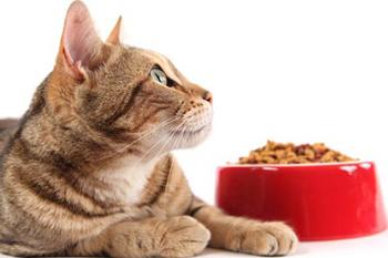 Холистики для кошек рейтинг