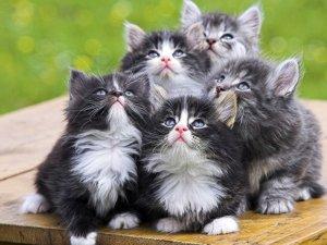 Нежелательность назначения Байтрила котятам