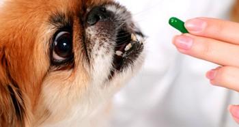 Лечение собаки таблетками