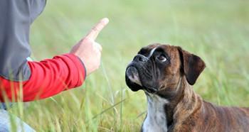 Обучение собаки команде лежать