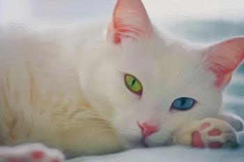 Определение породы кошки