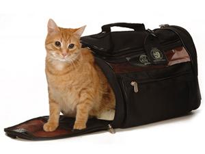 Применение Имунофана при перевозке кошки