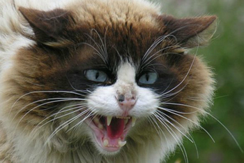 Проблема бешенства у кошек