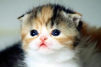 Проблема лишая у кошек