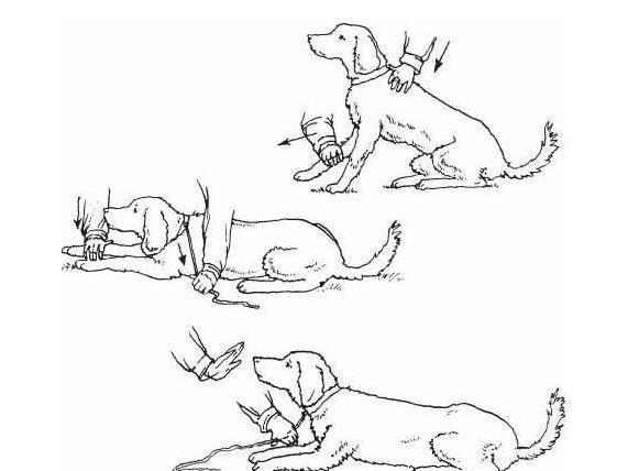 Схема обучения собаки