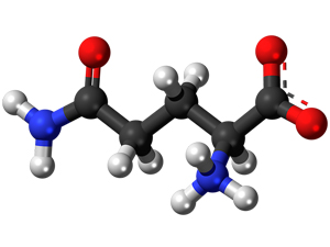 Снабжение организма кошки аминокислотами