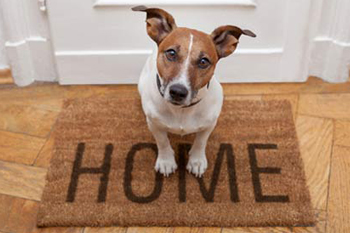 Собака в квартире
