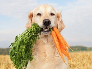 Фоспренил инструкция по применению для собак