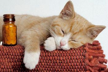 Успокоительные препараты для кошек