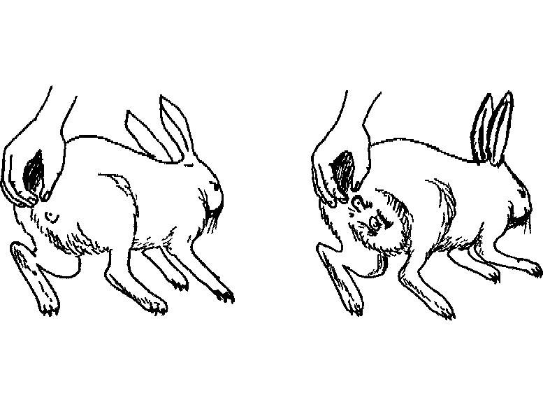 Выбор имени в зависимости от пола кролика