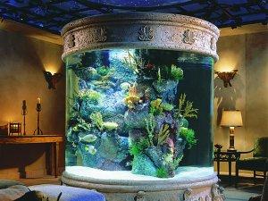 Предпочтительность содержания барбусов в высоком аквариуме