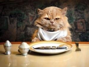 Аристократические клички для котов с родословной