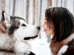 Возможность заражения собак от людей