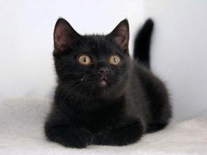 Имя для черного котенка
