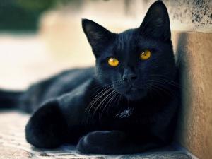 Клички для черных котиков