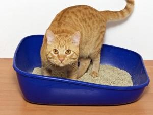 Проблема цистита у кошки