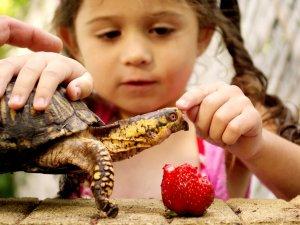 Выбор имени для черепахи вместе с детьми