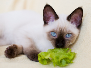Выбор низкалорийной еды для кошек