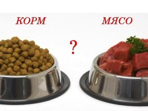 Выбор определенного питания для собаки