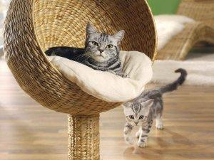 Обеспечение бытовых потребностей котенка