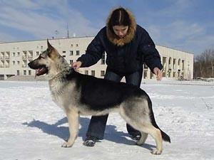 Дрессировка собаки на улице