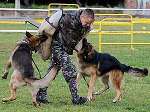 Дрессировка собаки с помощником