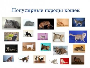 Фото популярных пород кошек