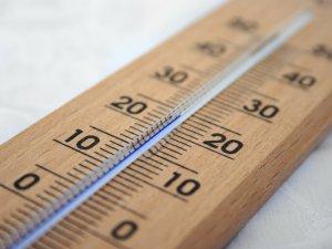Важность поддержки оптимальной температуры для канареек