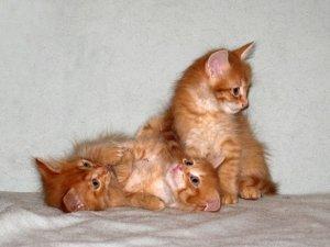 Выбор клички в соответствии с характером котенка