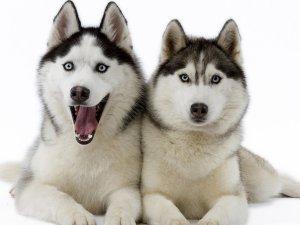 Выбор имени в зависимости от характера собаки