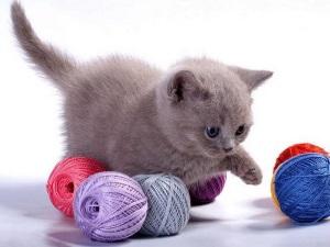 Имя для игривого котенка