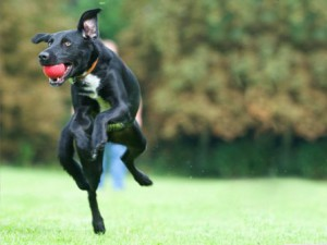 Резиновые мячики для собак
