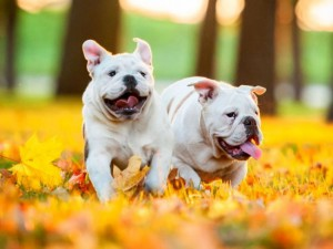 Повышение иммунитета собаки с помощью Гамавита
