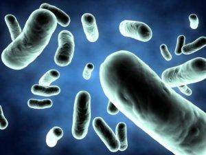 Назначение Байтрила при инфекционных заболеваниях