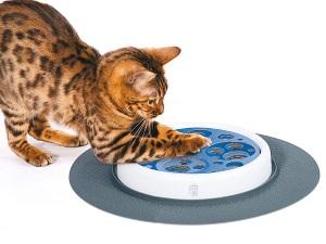 Польза интерактивных игрушек для кошек