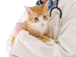 Обращение к ветеринару с котенком