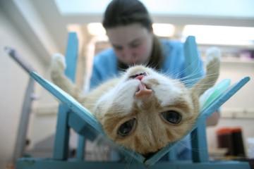 Кастрирование кота
