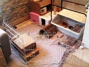 Вальер для домашнего кролика