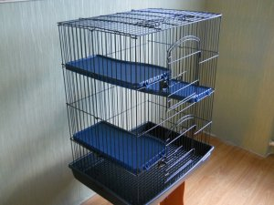 Необходимость просторной клетки для крыс