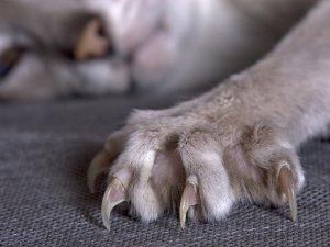 Использование запахов для защиты мебели от кошек