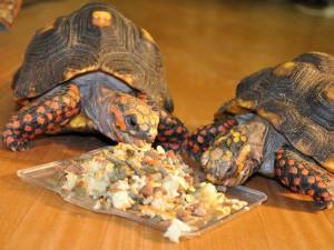 Комбинированные корма для черепах