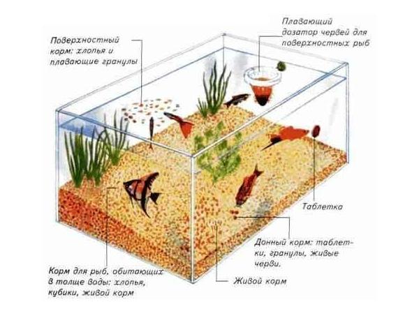 Общие правила кормления рыбок